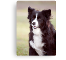 Smiley Face - border collie Canvas Print