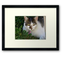 Miss Mia Mae Meow Framed Print
