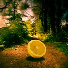 Lemon Entry by Neil Carey