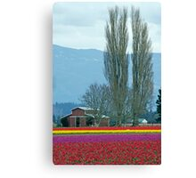 Farming Color. Canvas Print