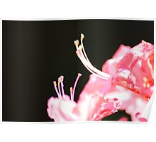 Macro Rhododendron Poster
