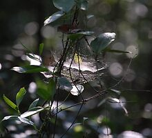Spider's Lair by zpawpaw