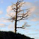 Wind Tree by Karen Karl