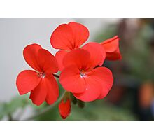 Red Flower For You Photographic Print