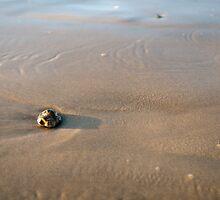 Beach Pebble by Patrick Bongers