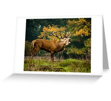 Bellowing Stag Greeting Card