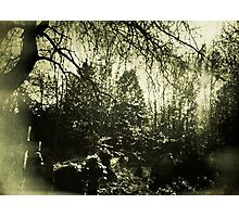 Beneath the boughs Photographic Print