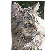 Sun Cat Poster
