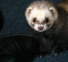 Baby Ferret & the Boot by sgardiner
