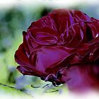 Red is the Rose by Clive