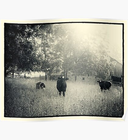 Three Cows Poster