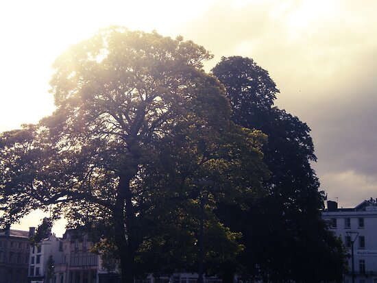 Cathedral Green by Claire Elford