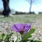 flower watching by Loretta Marvin