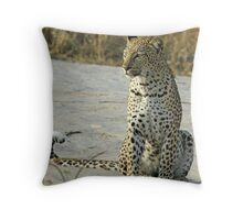 Young confident adult leopard! Throw Pillow