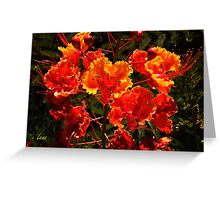 Mexican Red Bird Of Paradise Greeting Card