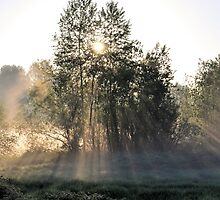 Morning Rays by Robert  Miner