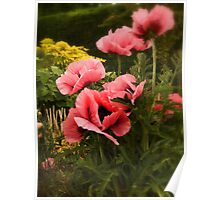 Mum's pink poppies Poster