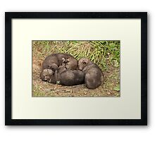 The Official Debut!!!!! Framed Print