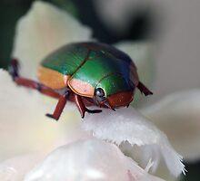 Big Green Bug. by minniemanx