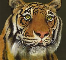 Bengal Tiger Portrait by Dana Parish