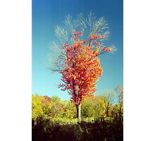 Autumn Flame Photographic Print