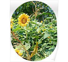 Sunny & Corn Poster