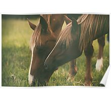 Horses grazing Poster