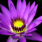 Lotus Flower Art by idesignstuff