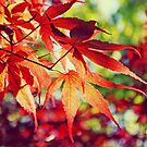Japanese Maple by Th3rd World Order