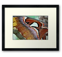 Butterflies have scales Framed Print