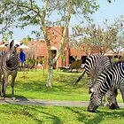 Zebras in our backyard by Alberto  DeJesus