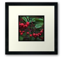 Red Berry Blur Framed Print
