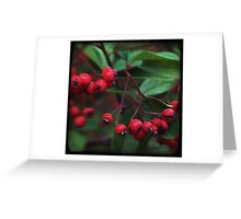 Red Berry Blur Greeting Card