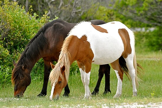 Assateague&#x27;s Painted Pony by Monte Morton
