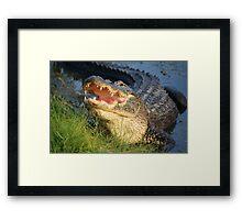 Dem Gators gots a Mouth Full of Big Teefers Framed Print