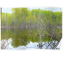 Spring Time Pond Poster