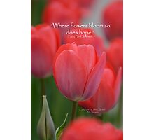 Where flowers bloom Photographic Print