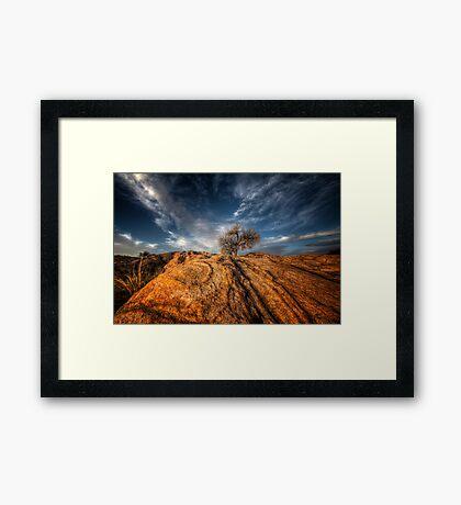 Tree Top Framed Print