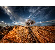 Tree Top Photographic Print