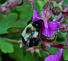 Bumble Bee by mishu78