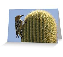 Gila Woodpecker ~ Male Greeting Card