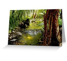 Land of the Giants Mt. Field Nat. Park Tasmania Greeting Card