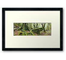 Mossy Myrtle Forest, Cradle Mountain, Tasmania Framed Print