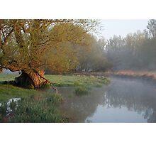 - Willow Tree Photographic Print