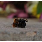 Abeilles by MittyDesques