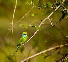 Little Green-bee Eater by liza1880