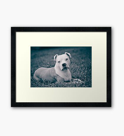 I Is Having A Rest Mum!  Framed Print
