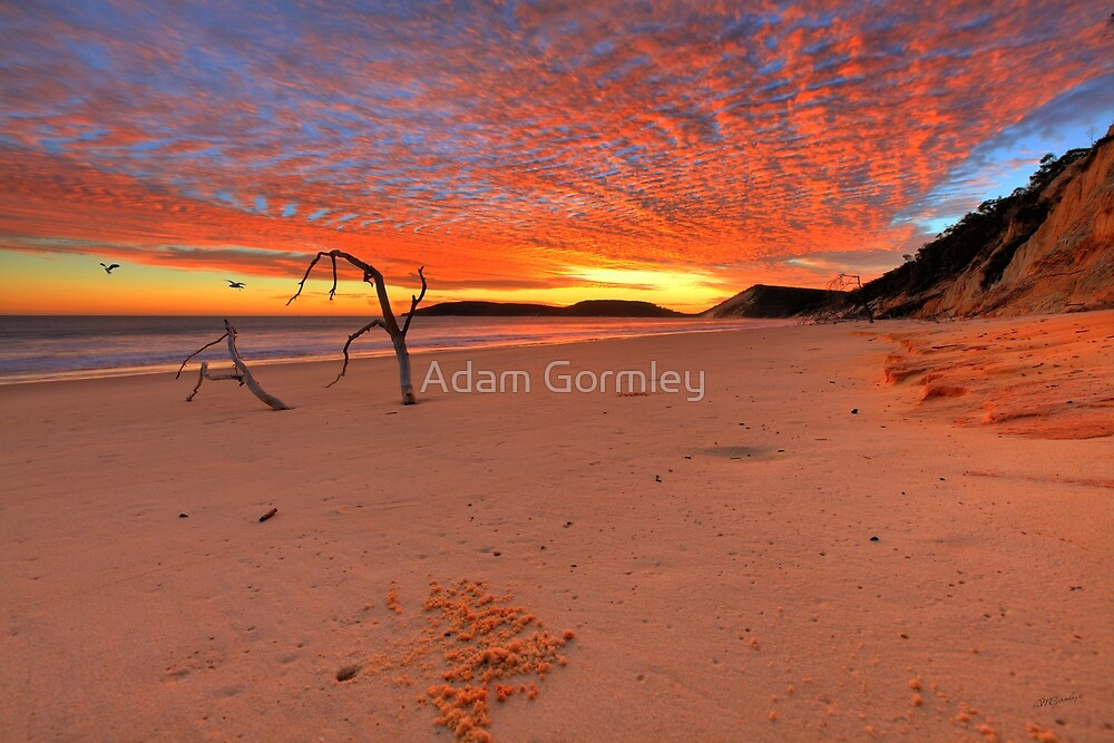 Double Island Sunrise by Adam Gormley