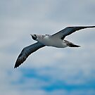 Seagull in Flight by Roland Pozo