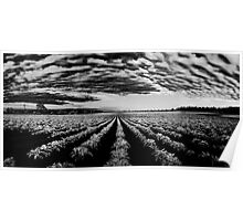Bridgehampton Potato Field Sunrise Poster